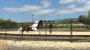 Exclusive tour by Joan of Sonoma Valley Stables